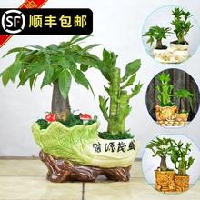 发财树wv贵竹节节高gf栽室内办公室客厅防辐射植物花卉盆景