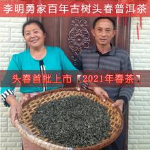 李明勇xi云南乔木头lu普洱茶生茶散装农家茶叶250克纯料春茶