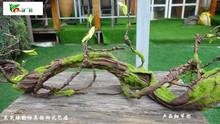 家居饰ya仿真枯藤蔓lu条可弯曲造型绿植树枝装饰花卉发泡干支