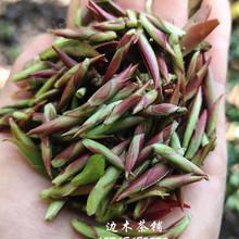 202yi年春茶紫芽p8云南普洱茶生茶野生古树紫芽苞茶散茶500g