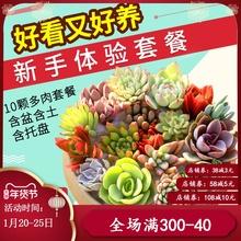 多肉植yi组合盆栽肉li含盆带土多肉办公室内绿植盆栽花盆包邮