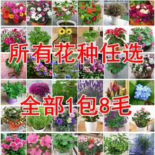花卉种子多种任选花yn6籽花种家cn量种子花四季播满9元包邮