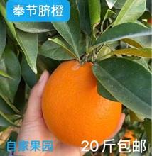 奉节当yn水果新鲜橙xq超甜薄皮非江西赣南伦晚