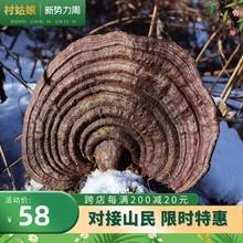 野生无zb赤芝250fg可切赤灵芝木灵芝特大巨大长白山直发