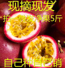 台农一zh云南新鲜紫ui装20-30个包邮有烂包赔特大红果