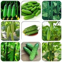 多美滋水果黄瓜种子zj6四季阳台nj盆栽水果黄瓜籽蔬菜种籽苗